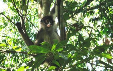 Coba & the spider monkeys