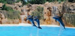 Is swimming with dolphins on top of your list? READ THIS FIRST!